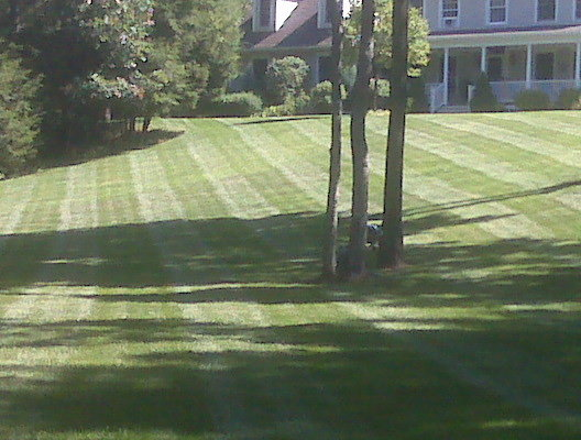 Mowing and trimming.