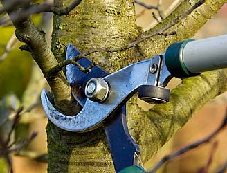 Pruning by big cutters.